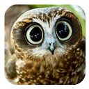small button, photo of owl face, links to GKES homepage