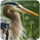 small button, photo of heron face, links to HES homepage