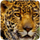 small button, photo of leopard face, click to access LMS homepage