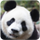small button, photo of panda face, links to LPES homepage